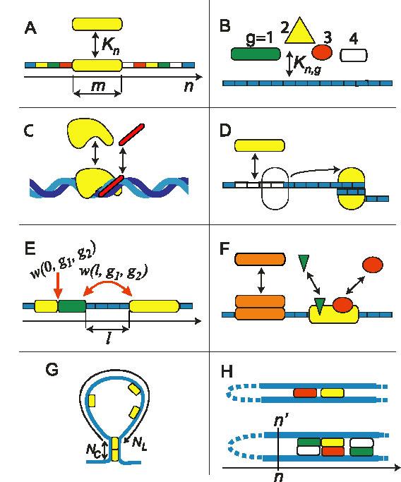 DNA-protein Binding In Chromatin