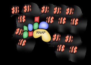 Quantitative Gene Regulation